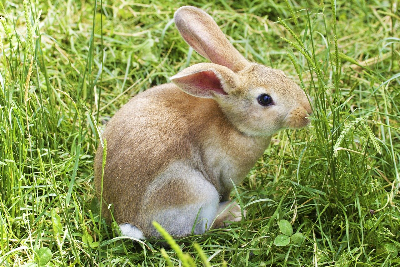 An Easter bunny in the grass.